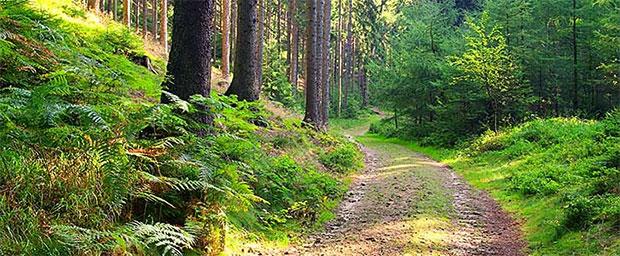 skogovag